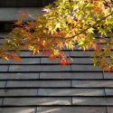 Back to School, Back to Fall: Autumn Roof Maintenance